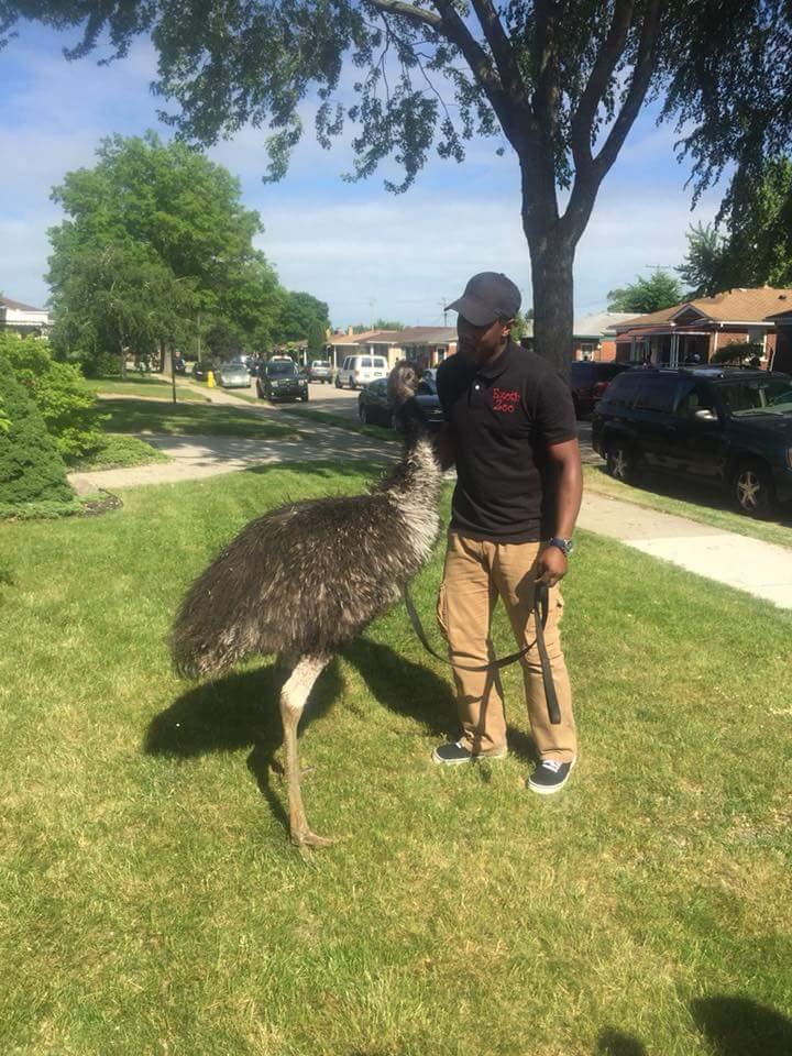 Emu - Bird